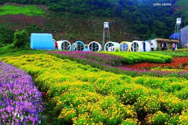 Rực rỡ cao nguyên Mộc Châu mùa hoa xuân đua nở